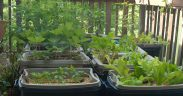 Step by step vegetable container garden